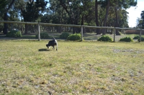 Floss- Banksia Park Puppies - 5 of 22