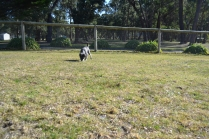 Floss- Banksia Park Puppies - 6 of 22