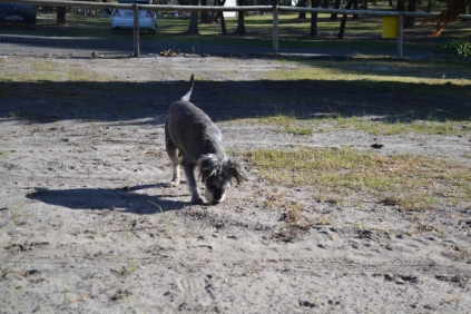 Floss- Banksia Park Puppies - 9 of 22