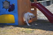 KitKat- Banksia Park Puppies - 29 of 30