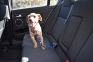 Tobasco modelling Barkey Blue in the car!