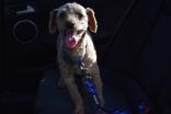 Tobasco modelling Barkey Blue in the car!