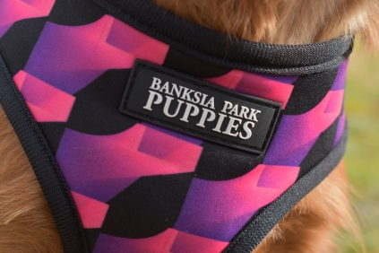 New Dog Accessories- Banksia Park Puppies - 50 of 190