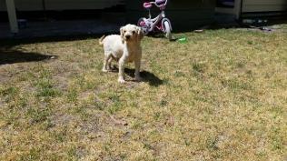 NOODLE- Banksia Park Puppies - 10 of 26