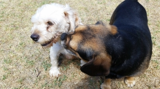 NOODLE- Banksia Park Puppies - 20 of 26