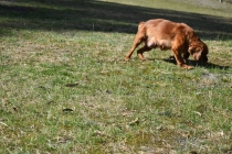 Roza-Cavalier-Banksia Park Puppies - 13 of 47