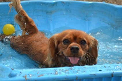 Keeping Cool This Summer Banksia Park Puppies