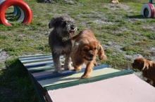 Our Mum and Dad dogs enjoying the obstacle course in the Agility Park!