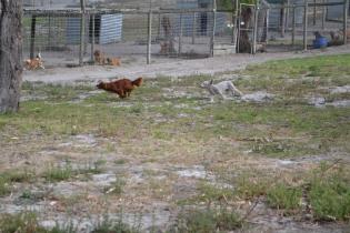 BeeBee-Moodle-Banksia Park Puppies - 10 of 33