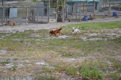 BeeBee-Moodle-Banksia Park Puppies - 9 of 33