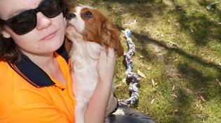 Demi-Cavalier-Banksia Park Puppies - 9 of 25