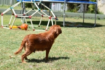 Neta-Cavalier-Banksia Park Puppies - 28 of 42