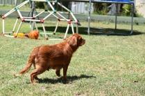 Neta-Cavalier-Banksia Park Puppies - 29 of 42