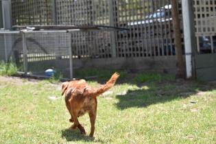Neta-Cavalier-Banksia Park Puppies - 33 of 42
