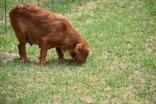 Noni-Cavalier-Banksia Park Puppies - 22 of 25