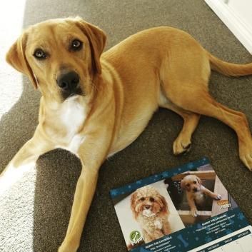 Sammy admiring his pupstar status starring in our Calendar!