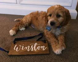 Winston as a little lad! @winstons_world3 DOB 3.8.17