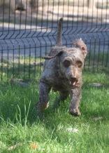 ALVIN - Bankisa park puppies - 1 of 16 (15)