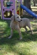 KIP- Bankisa park puppies - 1 of 19 (13)