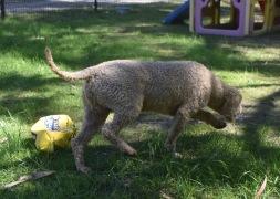 KIP- Bankisa park puppies - 1 of 19 (15)