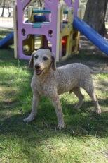 KIP- Bankisa park puppies - 1 of 19 (4)