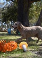 KIP- Bankisa park puppies - 1 of 19 (5)