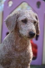 KIP- Bankisa park puppies - 1 of 19 (9)