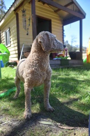 KIP- Bankisa park puppies - 1 of 19
