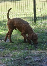 KYLE- Bankisa park puppies - 1 of 17 (6)