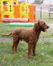 KOBIE - bankisa park puppies - 1 of 61 (22)
