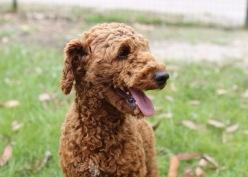 KOBIE - bankisa park puppies - 1 of 61 (48)