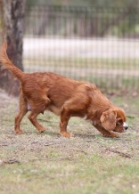 JOY - Bankisa park puppies - 1 of 35 (19)