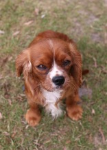 JOY - Bankisa park puppies - 1 of 35 (20)