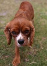 JOY - Bankisa park puppies - 1 of 35 (21)