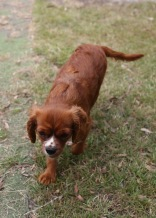 JOY - Bankisa park puppies - 1 of 35 (29)