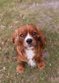 JOY - Bankisa park puppies - 1 of 35 (9)