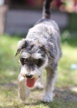 FLEUR - banksia park puppies - 1 of 60 (11)