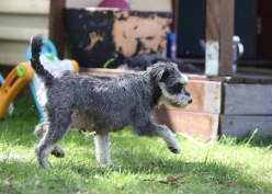 FLEUR - banksia park puppies - 1 of 60 (16)