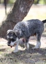 FLEUR - banksia park puppies - 1 of 60 (20)