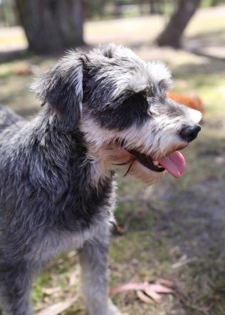 FLEUR - banksia park puppies - 1 of 60 (26)