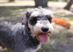 FLEUR - banksia park puppies - 1 of 60 (32)