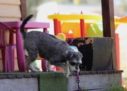 FLEUR - banksia park puppies - 1 of 60 (34)