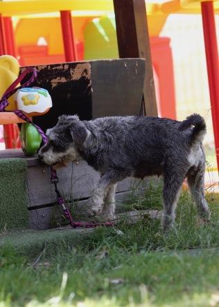 FLEUR - banksia park puppies - 1 of 60 (45)