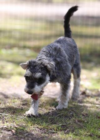 FLEUR - banksia park puppies - 1 of 60 (50)