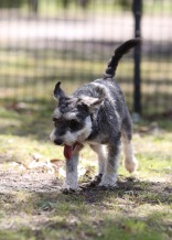 FLEUR - banksia park puppies - 1 of 60 (51)