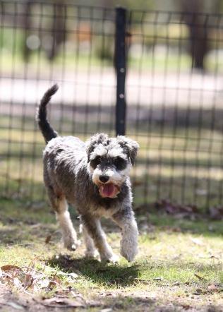 FLEUR - banksia park puppies - 1 of 60 (56)