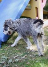 FLEUR - banksia park puppies - 1 of 60 (59)