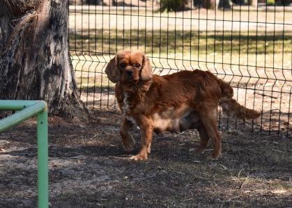 bunny - bankisa park puppies - 1 of 31 (10)