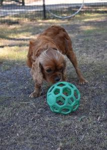 bunny - bankisa park puppies - 1 of 31 (11)