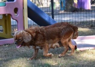 bunny - bankisa park puppies - 1 of 31 (15)